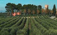 Viñedos de la Boella Tarragona