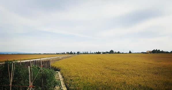 campos-de-arroz-delta-del-ebro