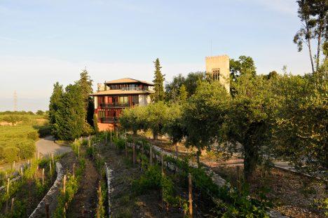 Olivos y viñedos componen la escapada gastronómica en Tarragona